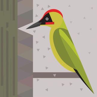 I Like Bird - Green Woodpecker