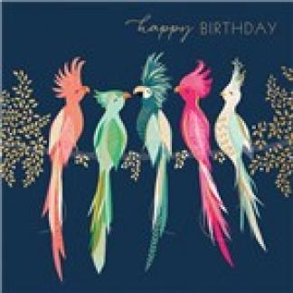 Birthday Card - Parrots